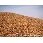 常年供应东北玉米玉米碴子玉米糠玉米芯每天短息QQ全国及时报价
