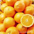 宜昌三峡秭归脐橙 量大价优,欢迎来宜昌采购