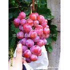 云南葡萄 优质红提葡萄 建水葡萄 2012年6月中下旬上市